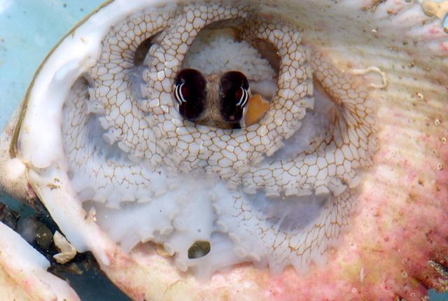 貝殻の中web