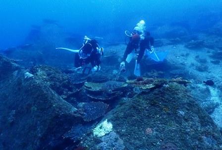 サンゴの食痕web