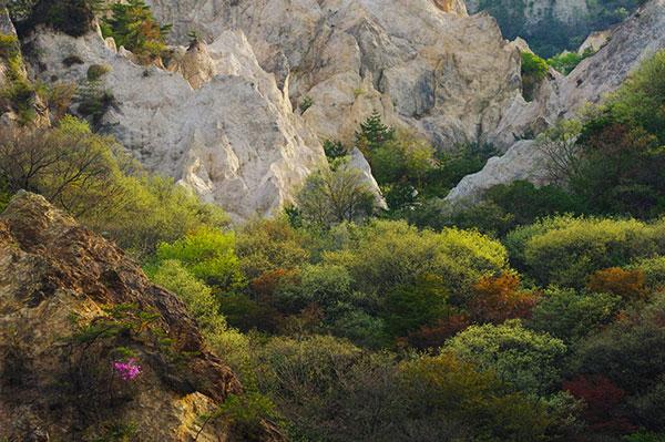 蓬莱峡の新緑
