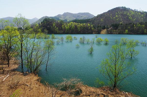 錦秋湖の湖面樹