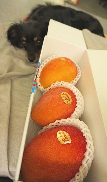 フルーツの日 (6)