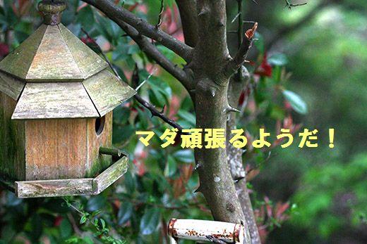 IMG_6782.jpg
