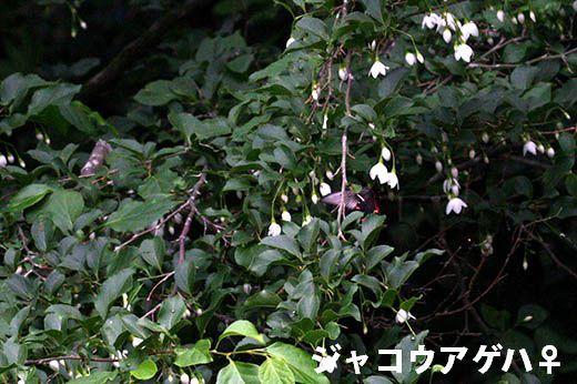 IMG_7692.jpg