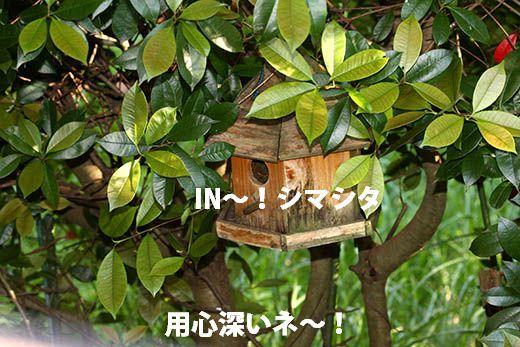 IMG_7825.jpg
