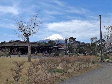 33忍野村から富士山を仰ぐ2016年4月