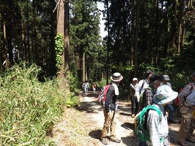 朝倉山城見学会登山道にて2016年5月15日 004