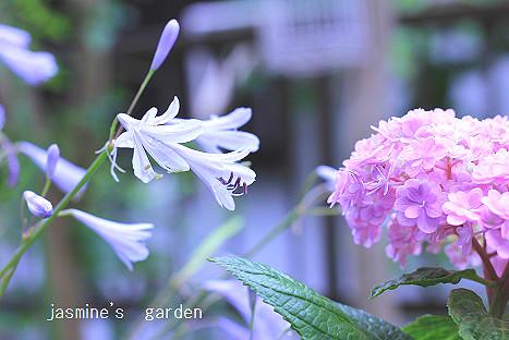 IMG_4179de.jpg