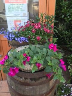 サフィニアの花が咲いた