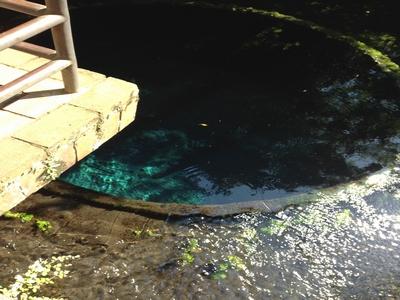 柿田川の疎水