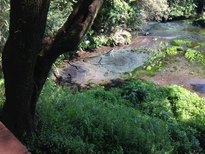 柿田川の疎水1