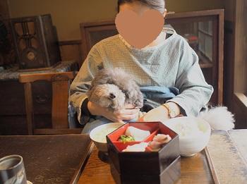 ジジさんうちのこ記念旅行20160311-6