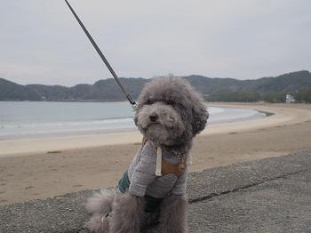 ジジさんうちのこ記念旅行20160311-11