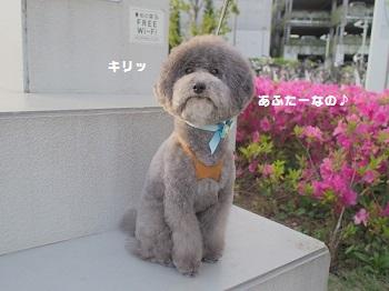 じじさんトリミング20160508-3
