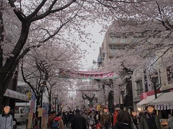お花見2-20160402-1