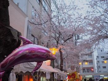 お花見2-20160402-8