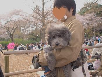 清水公園20160403-3