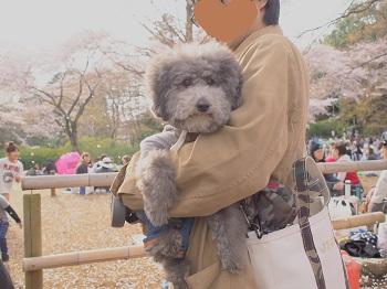 清水公園20160403-15