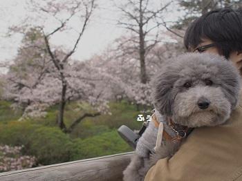清水公園20160403-9