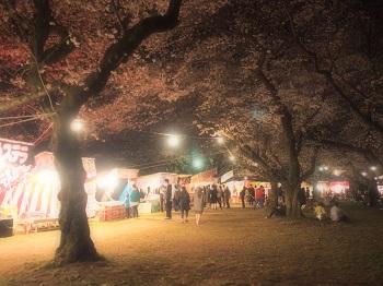 夜桜20160403-1