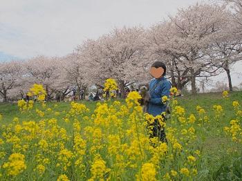 お花見20160409-18