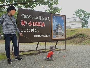小田原城20160929-2
