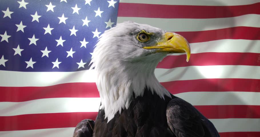 08_Bald Eagle