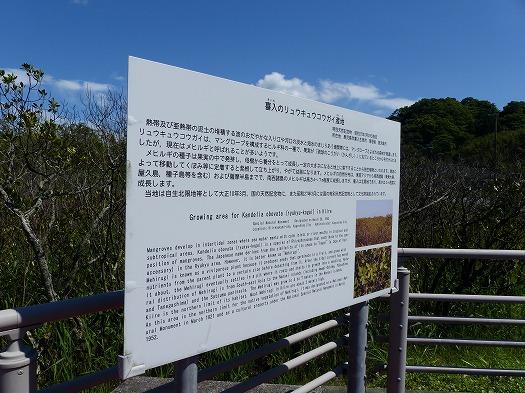 mehirugi167lk (4)