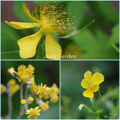 黄色の花76022