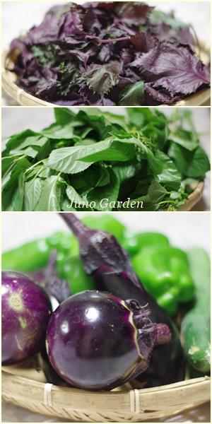 お野菜160804
