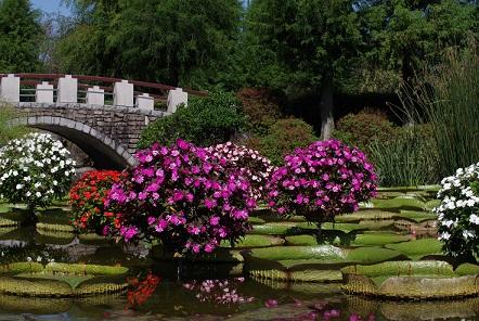 花陰の池161010