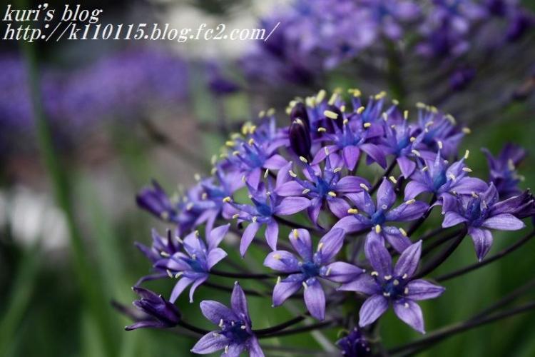 ランニングコースの花 (1)