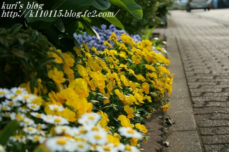 ランニングコースの花 (2)