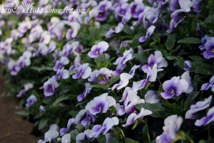 ランニングコースの花 (3)