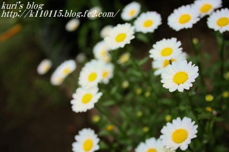 ランニングコースの花 (4)