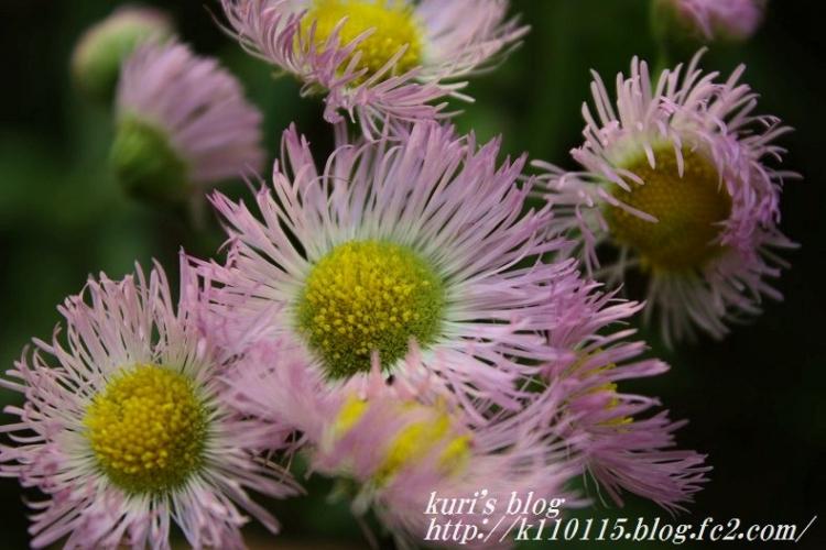 ランニングコースの花 (5)
