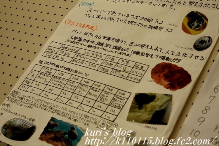 2016かがく展 (3)