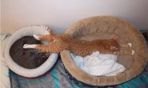 熟睡できない猫c