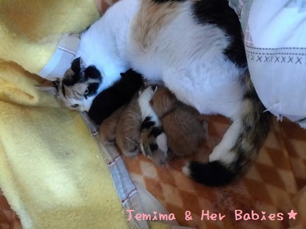 ジェミマ&赤ちゃんご支援
