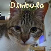 ディンブラ
