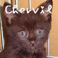チャービル