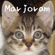 マジョラム
