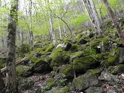 古い苔の上の新緑