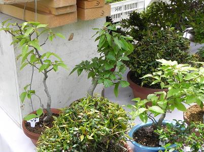 盆栽10jpg