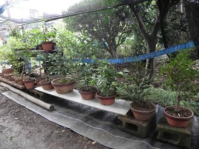 庭寒冷紗盆栽棚