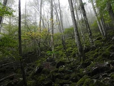 ウ苔岩地帯