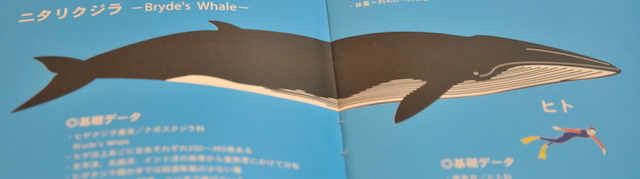 ニタリクジラとヒト