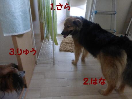 P1130203(1).jpg