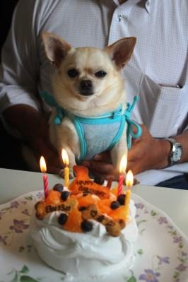幸 誕生日