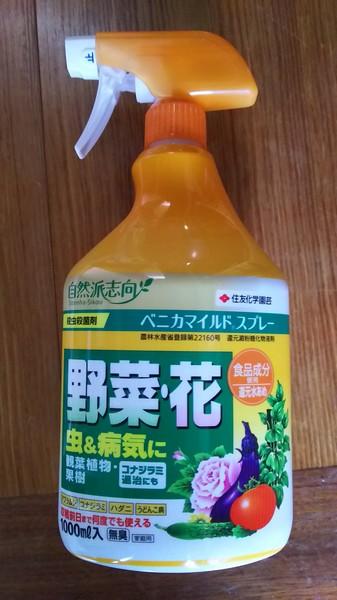 ゴーヤ花 (3)