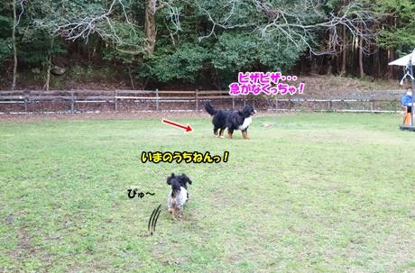 DSC01450_201604301825551e4.jpg